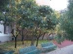 100_6587 Giardino via Terraggio