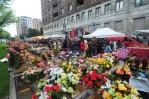 fiori in repubbl