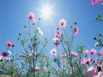 fiori_di_prato_004
