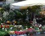 fiori-e-piante-a-porta-romana-per-il-tredesin-de-marz-0_69286-kG6--400x320@Milano