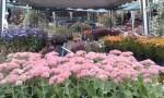 fiori_floralia_milano-2