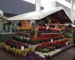 Piazza Portello_Mercatini Primavera