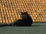 gatto_nero_sul_tetto