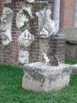 gatto tra i resti