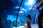 vasca acquario