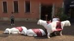 gregge pecore piazzetta S. Nazaro