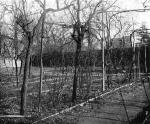 milano-vigna-di-leonard-foto-di-a-paoletti-libri-luca-beltrami-2
