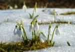 fiori e neve