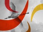 Luca uccello di fuoco