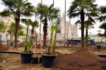 palme-banani-piazza-duomo-1300x867